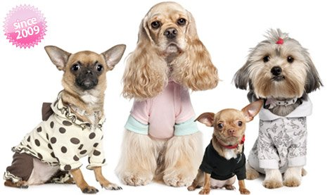 Pink Top for Small Dogs with Straps: Spring/Summer collection of fashion clothings shipping to USA and Canada